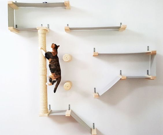Room Interior Design with cat shelvings